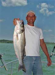 Ray Williamson stands on the bow of his Boston Whaler holding a huge fresh caught striper.